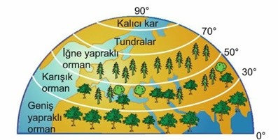 Enlem sıcaklık ilişkisine bağlı bitki örtüsü yatay dağılışı