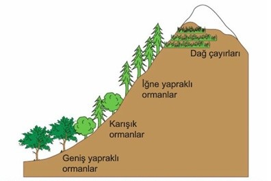Yükselti sıcaklık ilişkisine bağlı bitki örtüsü dikey dağılışı